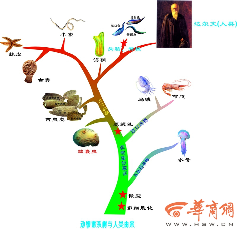 """西大团队重要成果 人类祖先从""""厘米""""推至""""毫米"""""""